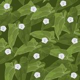 Sömlös bakgrund med gräsplansidor och blommor också vektor för coreldrawillustration Royaltyfri Bild