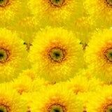 Sömlös bakgrund med solrosen Arkivbild
