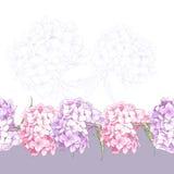 Sömlös blom- gräns för härlig rosa vanlig hortensia Arkivfoto