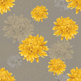 Sömlös blom- grå färgmodell med guld- krysantemum Arkivfoto