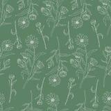 Sömlös blom- modell, Calendulablomma som isoleras på grön bakgrund, botanisk hand dragen klottervektorillustration Royaltyfria Bilder