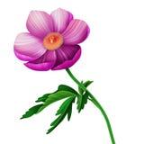 Sömlös blom- modell med anemonblommor Arkivfoton