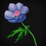 Sömlös blom- modell med anemonblommor Arkivbild