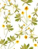 Sömlös blom- modell med gula blommor Arkivfoton