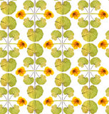 Sömlös blom- modell med gula blommor Fotografering för Bildbyråer