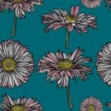 Sömlös blom- modell med kamomill Royaltyfri Illustrationer