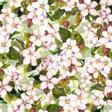 Sömlös blom- upprepad mall med den blommande blomman - rosa äppleblomning Vattenfärghandmålning vektor illustrationer