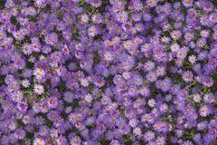 Sömlös blommamodell Royaltyfria Foton
