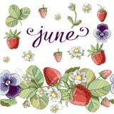 Sömlös borste med blom- romantiska beståndsdelar, jordgubben och violett royaltyfri illustrationer