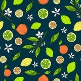 Sömlös citrus modell med gula citroner, bittra apelsiner, limefrukter royaltyfri illustrationer