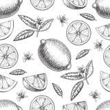Sömlös dragen limefrukt eller citron för vektor hand Helheten halva skivade stycken, tjänstledigheter skissar Frukt inristad stil Arkivfoto