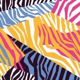 Sömlös färgrik textur för djur hud av sebran Arkivbild