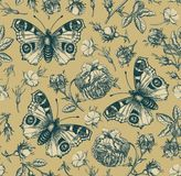 Sömlös för Rose Wallpaper Drawing för bakgrund för tappning för blommor för modellpåfågelfjäril realistisk isolerad agrostemma gr royaltyfria bilder