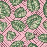 Sömlös geometrisk modell för vektor med gröna monsterasidor på rosa bakgrund stock illustrationer