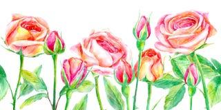 Sömlös gräns av rosor Briar och örter Arkivbild