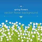 Sömlös gräns med vårblommaliljekonvaljen, blom- baner, bakgrund, vektorillustration Vita knoppskogblommor royaltyfri illustrationer