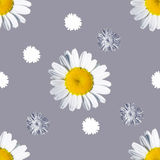 Sömlös grå bakgrund med kamomill Arkivbild