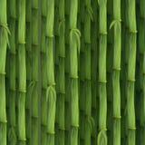 Sömlös grön bambubakgrund Arkivfoton