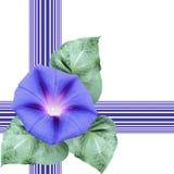 Sömlös illustration med blommaloachen vektor illustrationer