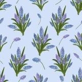 Sömlös modell av buketter av den blåa muscarien för blommor på en blå bakgrund vektor stock illustrationer