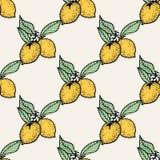 Sömlös modell av citroner Royaltyfri Foto