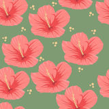 Sömlös modell av den tropiska rosa hibiskusen vektor illustrationer