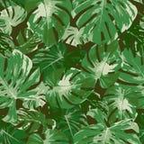 Sömlös modell av det tropiska gröna monsterabladet, naturlig vektor Arkivbild