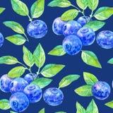 Sömlös modell av ett blåbär Fotografering för Bildbyråer