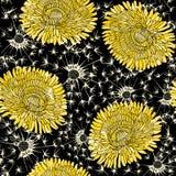 Sömlös modell av maskrosor Hand-dragen blom- bakgrund, vektor illustrationer