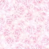 SÖMLÖS modell av rosa pionblomningar Arkivfoton