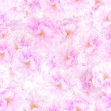 SÖMLÖS modell av sakura blomningar Arkivfoto