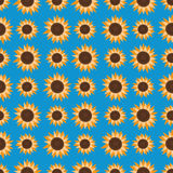 Sömlös modell av solrosor, på ett ljus - blå bakgrund Royaltyfri Fotografi
