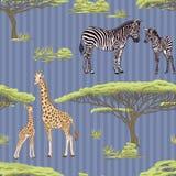 Sömlös modell, bakgrund med den vuxna sebran och giraff och sebra och giraffgröngölingar också vektor för coreldrawillustration vektor illustrationer