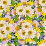 Sömlös modell för aster och för lös blomma Royaltyfri Fotografi