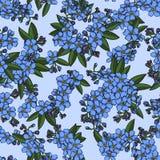 Sömlös modell för blå förgätmigej Arkivfoto