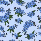 Sömlös modell för blå förgätmigej Royaltyfria Bilder