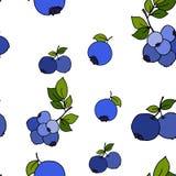 Sömlös modell för blåbär vid handteckningen på vita bakgrunder Royaltyfri Fotografi
