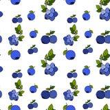 Sömlös modell för blåbär vid handteckningen på vita bakgrunder Royaltyfri Bild