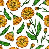 Sömlös modell för Calendula Isolerade medicinska blomma och sidor Royaltyfria Bilder