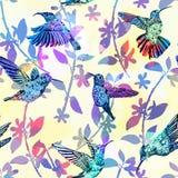 Sömlös modell för kolibri Hand dragen tropisk exotisk färgrik bakgrund Arkivfoto