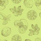 Sömlös modell för limefrukt och för mintkaramell Arkivfoto