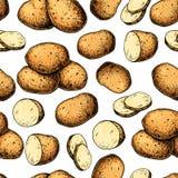 Sömlös modell för potatisvektor Hand dragen matbakgrund Teckning vektor illustrationer
