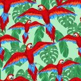 Sömlös modell för tropiska fåglar med papegojor och vektor illustrationer