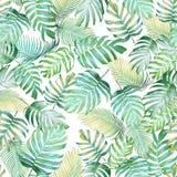 Sömlös modell för tropiska sidor av den Monstera philodendronen och PA Royaltyfri Fotografi