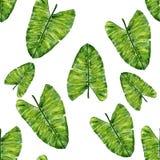 Sömlös modell för tropiska sidor Vattenfärghand-teckning illustration vektor illustrationer
