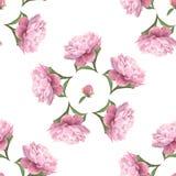 Sömlös modell för vattenfärg av rosa pionblommor vektor illustrationer
