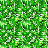 Sömlös modell för vattenfärg Hand målad illustration av tropiska sidor och blommor Vändkretssommarmotiv med Liana Pattern arkivbilder