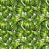 Sömlös modell för vattenfärg Hand målad illustration av tropiska sidor och blommor Vändkretssommarmotiv med Liana Pattern Royaltyfri Bild