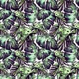 Sömlös modell för vattenfärg Hand målad illustration av tropiska sidor och blommor Vändkretssommarmotiv med Liana Pattern Fotografering för Bildbyråer