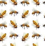 Sömlös modell för vattenfärg med biet stock illustrationer